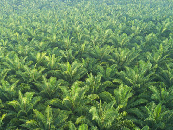 Agriculture Land for Sale in Malaysia